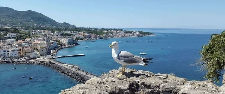 Bay of ischia : Ischia Island to Fall in Love. Unforgettable Charm and Pleasure