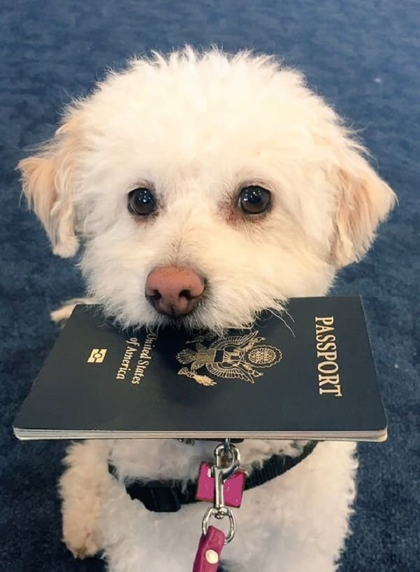 How Many People Travel with Pets? And how do you travel?