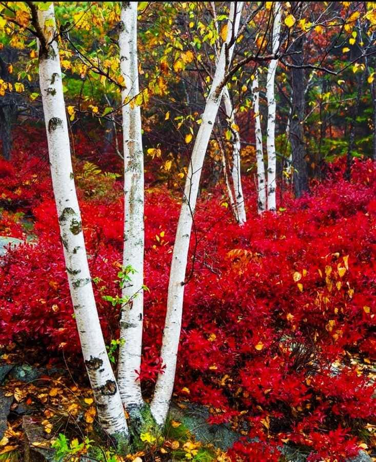 Acadia U.S. National Park - Maine