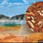 Yellowstone and the COVID-19 test (coronavirus)