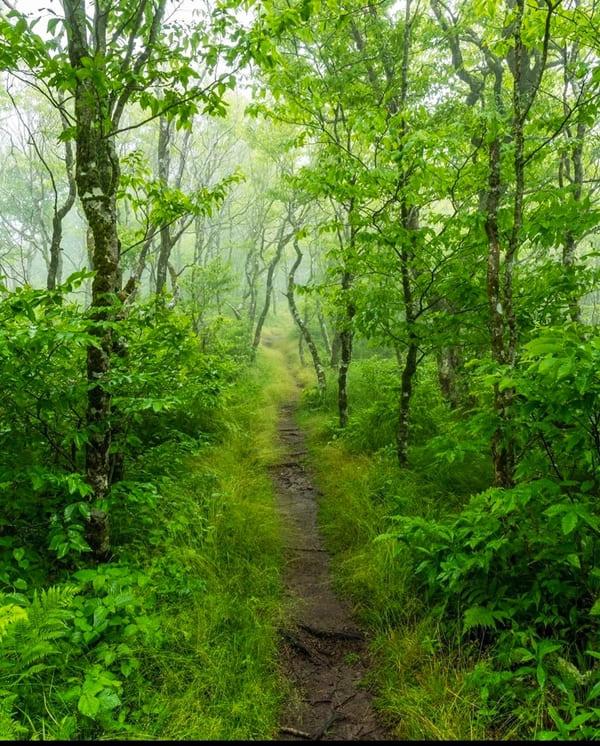 Blue Ridge Parkway 2021: Traversing the Appalachians - Forest