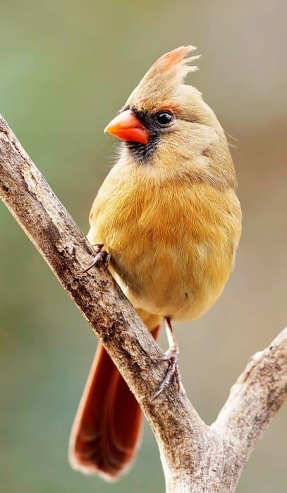 Shenandoah National Park Birds