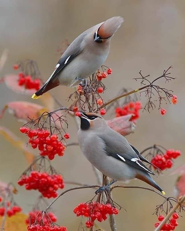 #Birds Photo #Traveling #2021 #luggage #suitcases #photo #traveltips #homedecor #house #Travel #Gadgets - #mountain #eco #tourism #decor #Powerbank #love #inlove #palace #history #decoracion #DIY