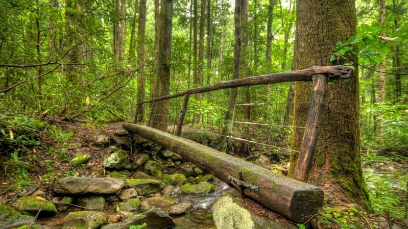 Great Smoky Mountains:The most popular National Park in the US